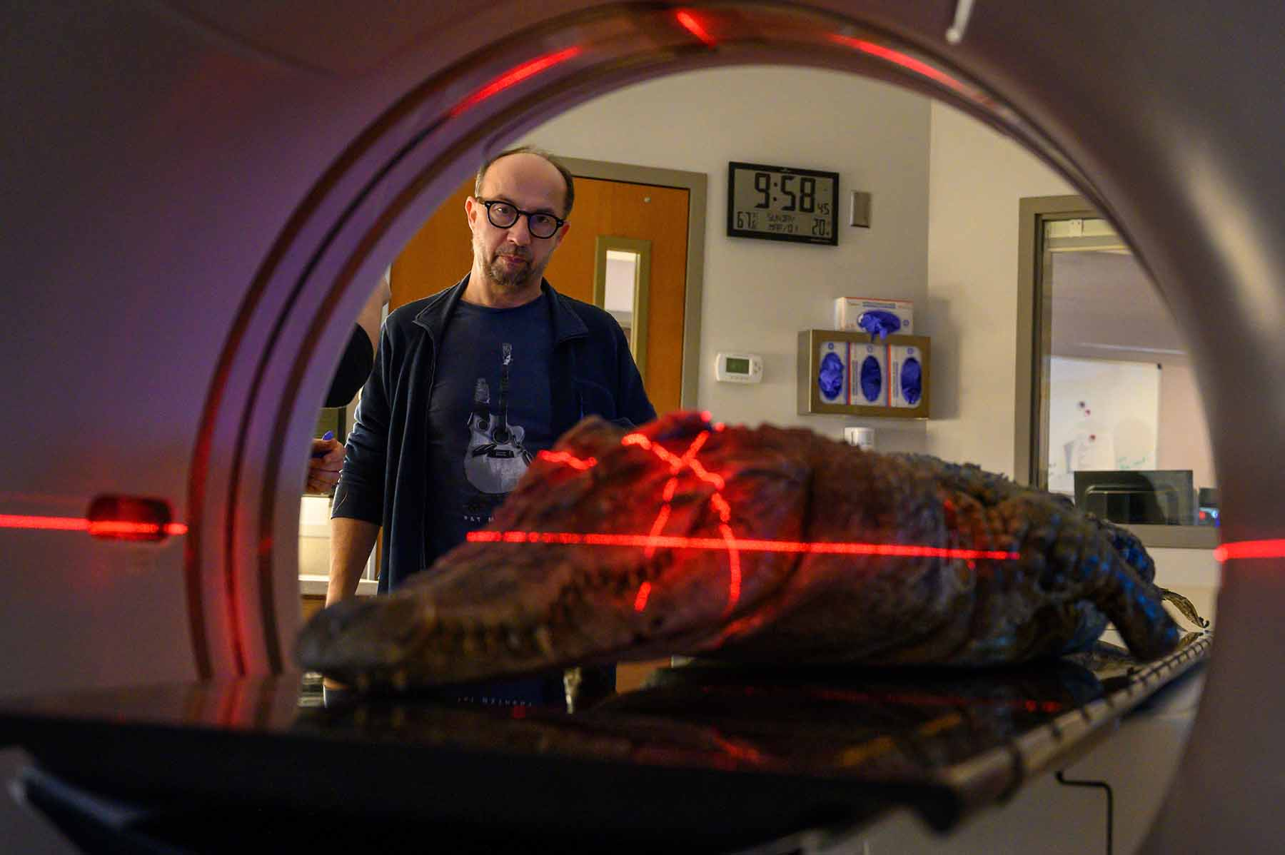 A crocodile being analyzed in a CT scanner
