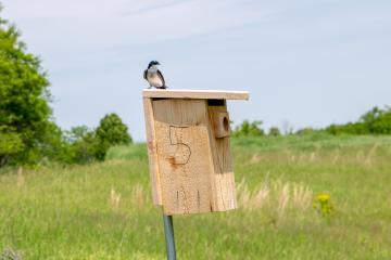 A bird sits on a bird box on The Ridges