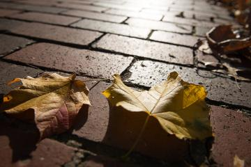Fall leaves are seen on a brick pathway at Ohio University.