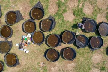 Aerial view of the cattle tank mesocosms used to track wood frog development