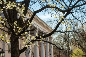 Spring campus beauty photo