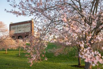Blooming Cherry Blossom trees outside the Ohio Bobcats Peden Stadium