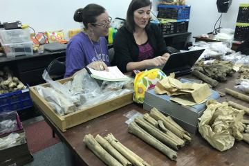 Sabrina Curran and Claire Terhune work on a lab table covered with fossils