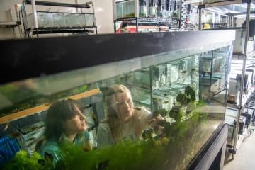 Two undergraduate students look into a fish tank with lots of greenery and fish