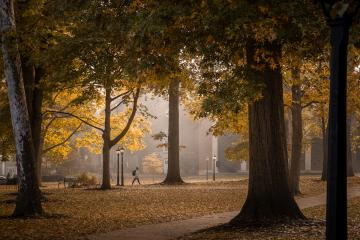 College Green in the fall